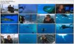 Zabójcza szybko¶æ / Sea Strikers (2010) PL.720p.HDTV.x264 / Lektor PL