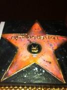 Patricia Heaton celebrating her star on H'wood blvd